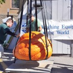 1,000lb. gourds hit Oswego