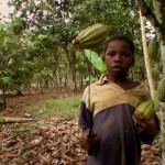 Documentary reveals child abuse in African cocoa industry