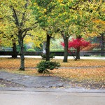 Mild autumn might lead to rough winter