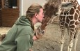 Oswego State alumna cares for April, calf