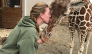 Oswego State alumna cares for April, calf